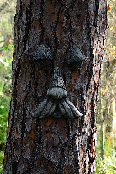 """Post Your """"Tree People"""" Pictures-tree-person-4.jpg"""
