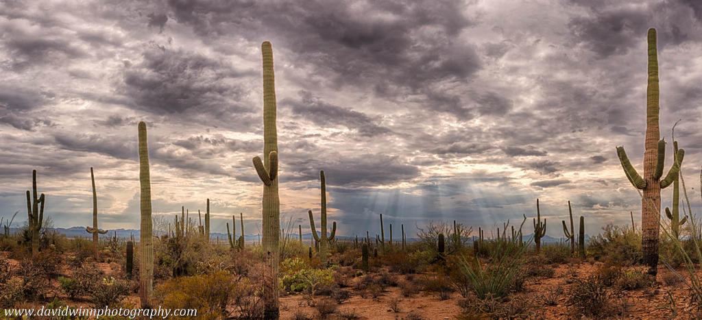 Saguaro National Park trip-_dw16116_hdr_1-pan-green-dvs-2.jpg