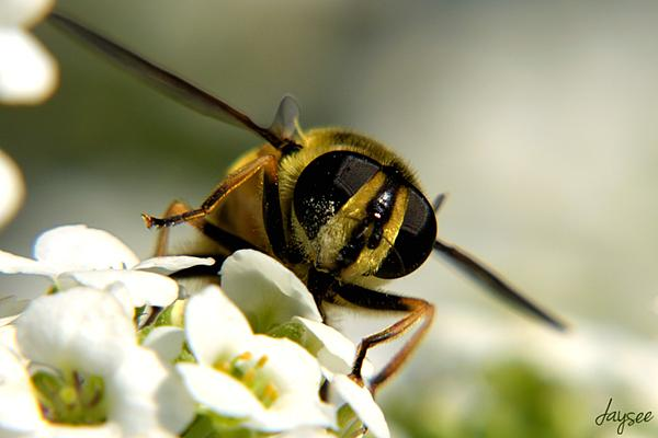 Insects with non macro lenses-028.jpg