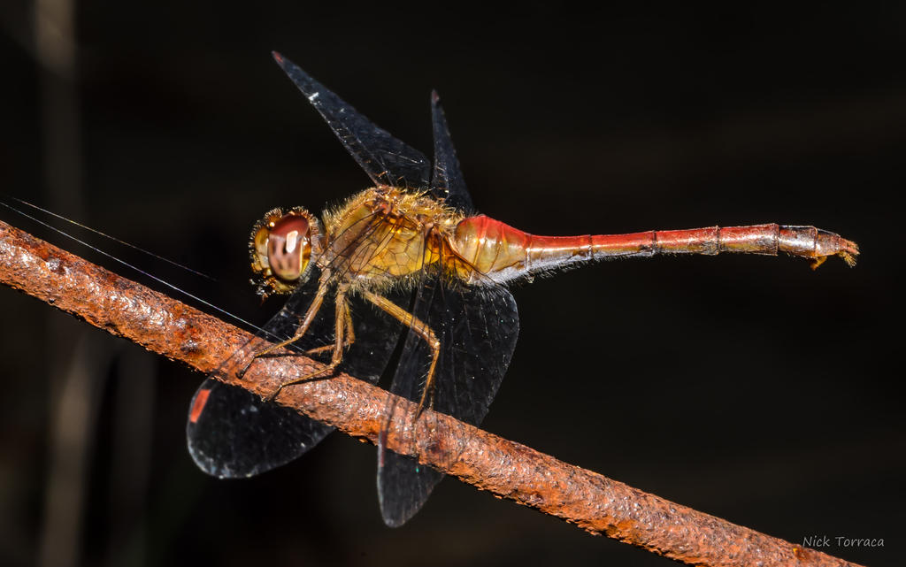 Help with macrophotography on D7100 with 55 f3.5 P.C-d7k_7356.jpg