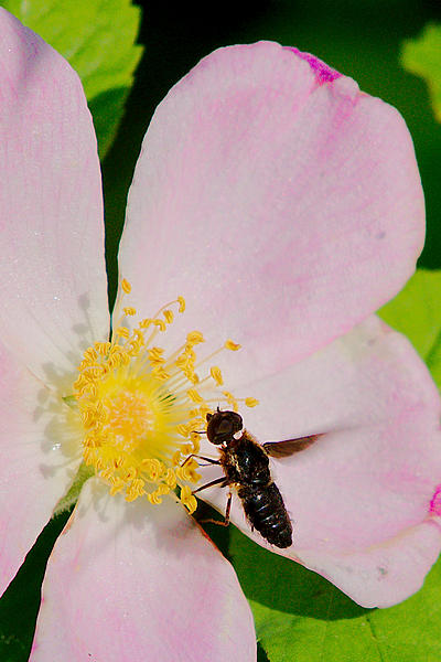 Insects with non macro lenses-dsc_6646-jesse-lake-east-200-500-tc-0008.jpg