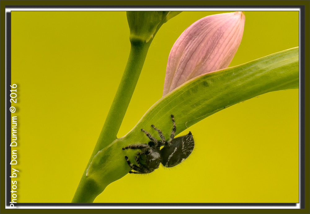 Insects with non macro lenses-front-porch-stuff-9058-edit.jpg