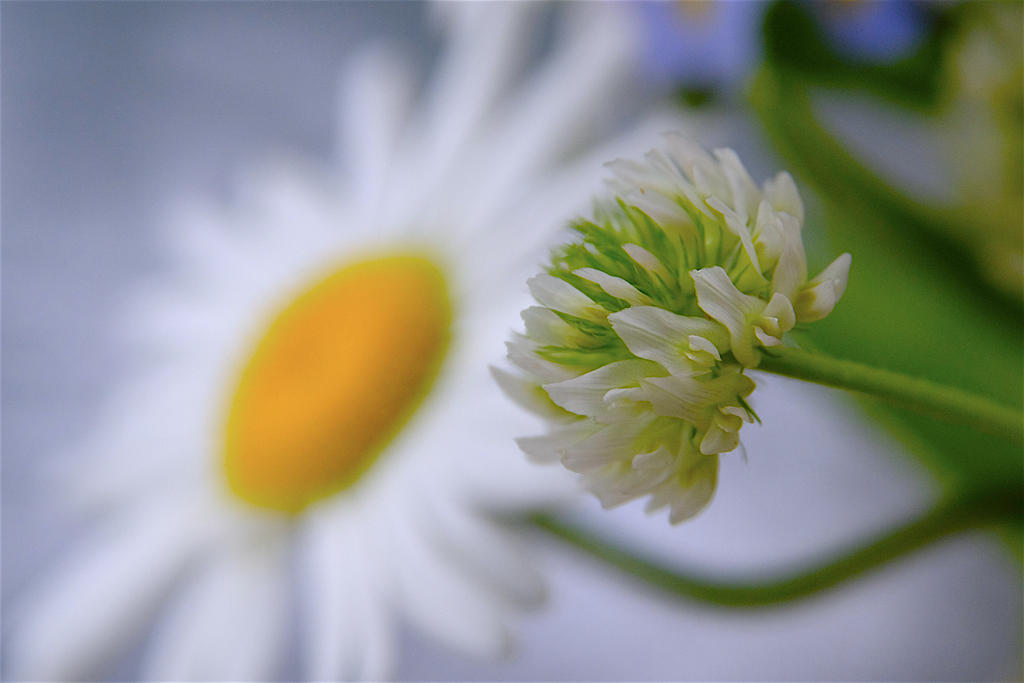 Questions about extension tubes-_dsf6500-copie.jpg