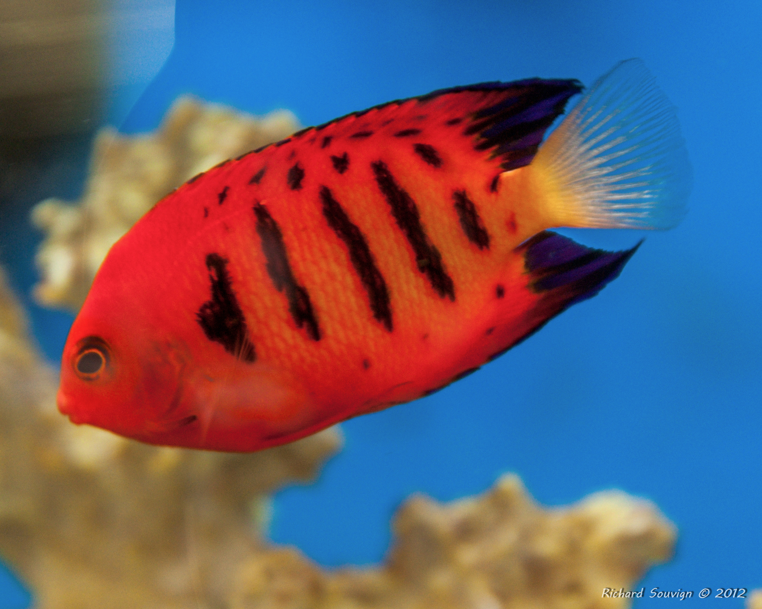 Saltwater Tropical Fish Saltwater Tropical Fish d