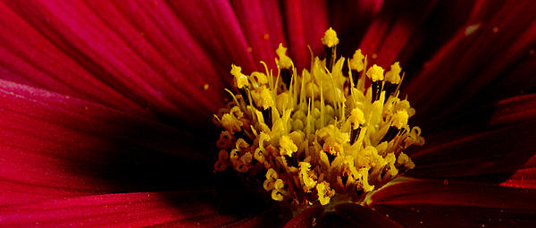 Post your macro photos here-dsc_5370-floral-250-magnified-macros-0063.jpg