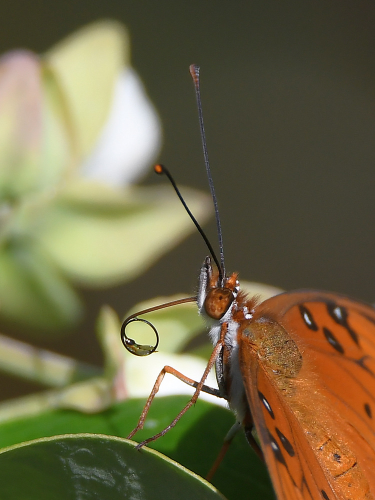 Insects with non macro lenses-frit5.jpg