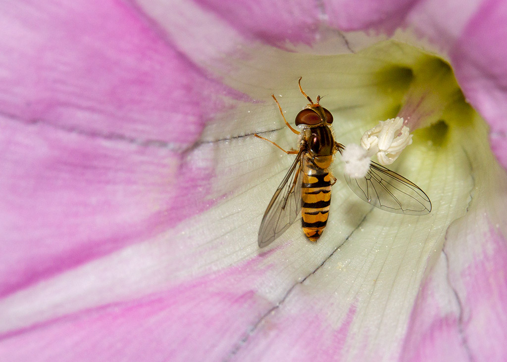 Insects with non macro lenses-dsc_9466.jpg