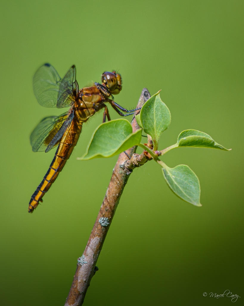 Insects with non macro lenses-d72_7767.jpg