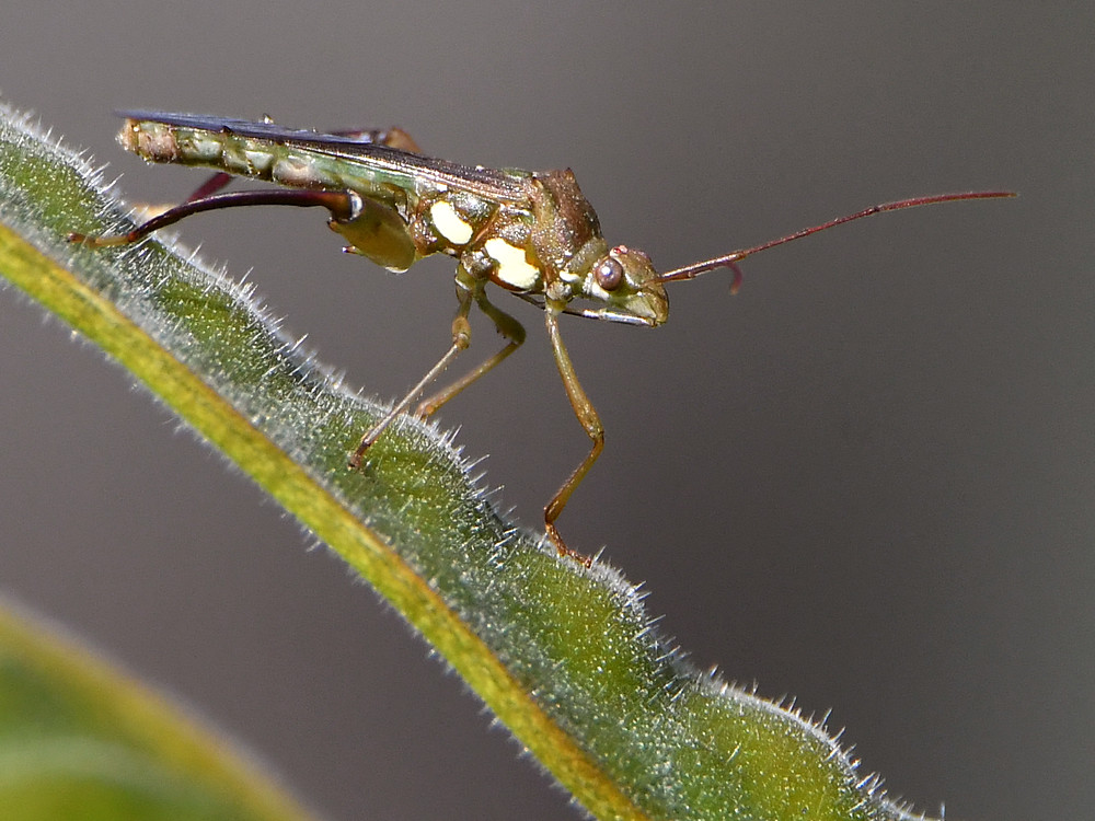 Insects with non macro lenses-tbb4.jpg