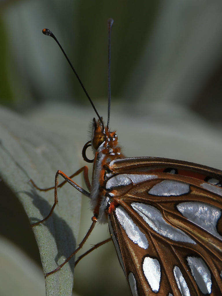 Insects with non macro lenses-frit4.jpg