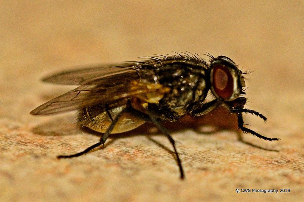 Post your macro photos here-10-27-19-cr_7500365-on1.jpg
