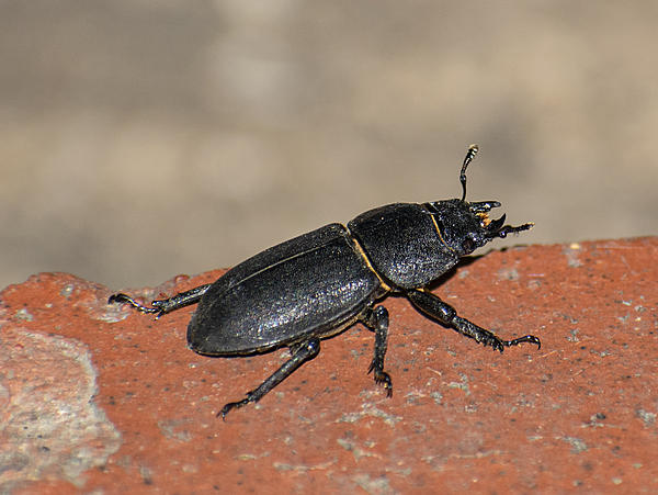 Insects with non macro lenses-bug3.jpg