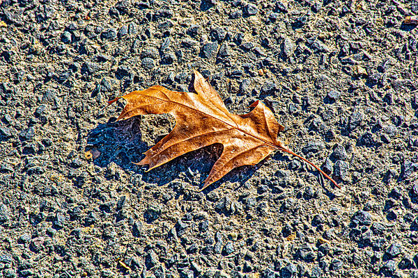 Post your leaf shots.-710_0119-edit.jpg