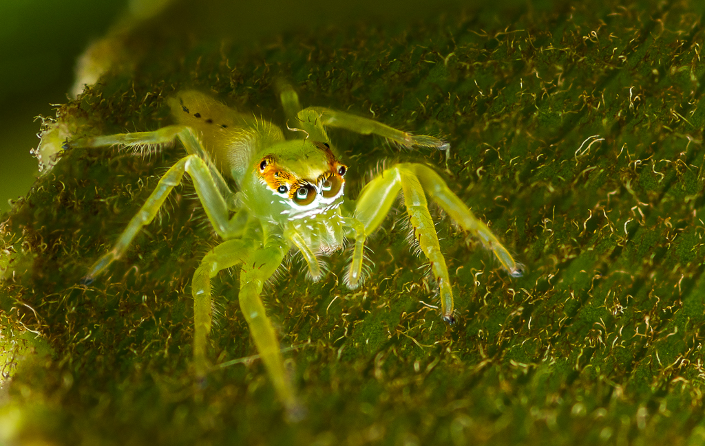 Post your focus stacking photos here-green-jumper._.jpg
