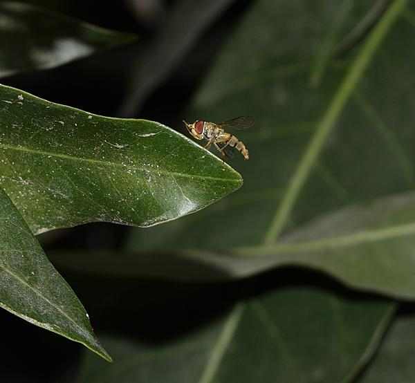 Insects with non macro lenses-_dsc1358.jpg