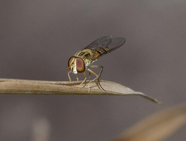 Insects with non macro lenses-_dsc1363a.jpg