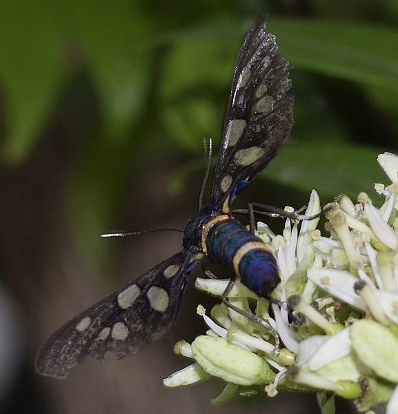 Insects with non macro lenses-_dsc2402.jpg