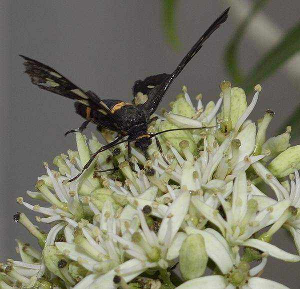 Insects with non macro lenses-_dsc2409.jpg