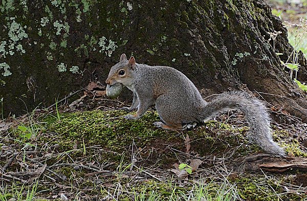 June 2020 Theme: Two Options for Choices-squirell_food-19jun20.jpg