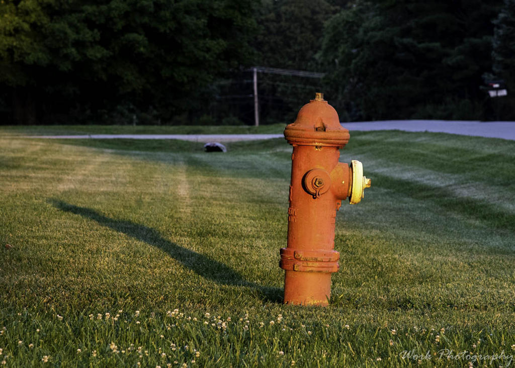July 2020 Assignment - Fire Hydrants/Manhole Covers-20200707-r81_4278.jpg