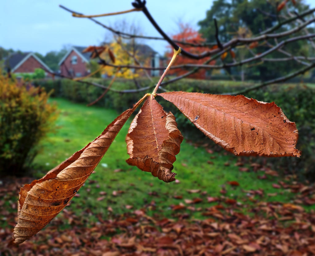 Post your Olympus EM5 MKII Images!-leaves-3.jpg
