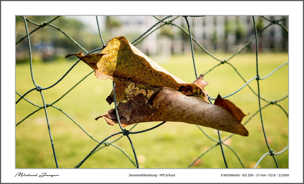 Olympus 17mm f/2.8 Pancake-17mm-school-leave-fence1-1.jpg