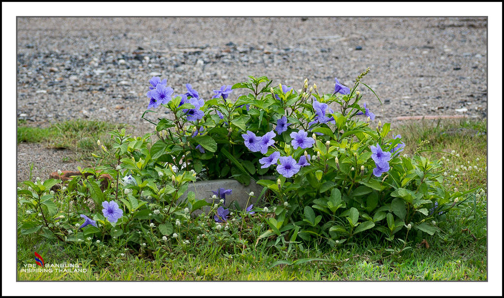 Michael's Photo Thread-tiny-purple-flowers-1.jpg