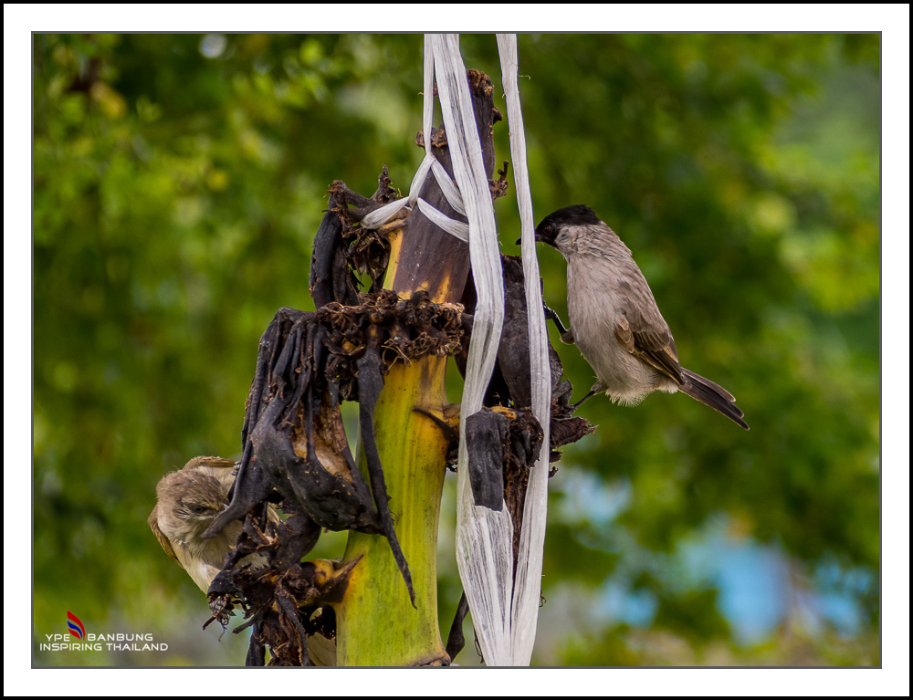 Michael's Photo Thread-fast-birds-6.jpg