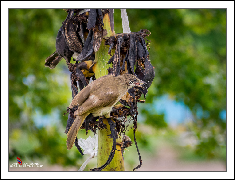 Michael's Photo Thread-fast-birds-7.jpg