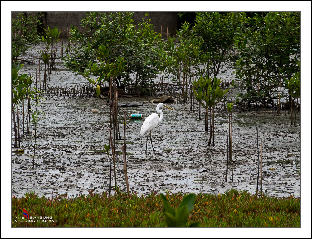 Michael's Photo Thread-stork-1.jpg