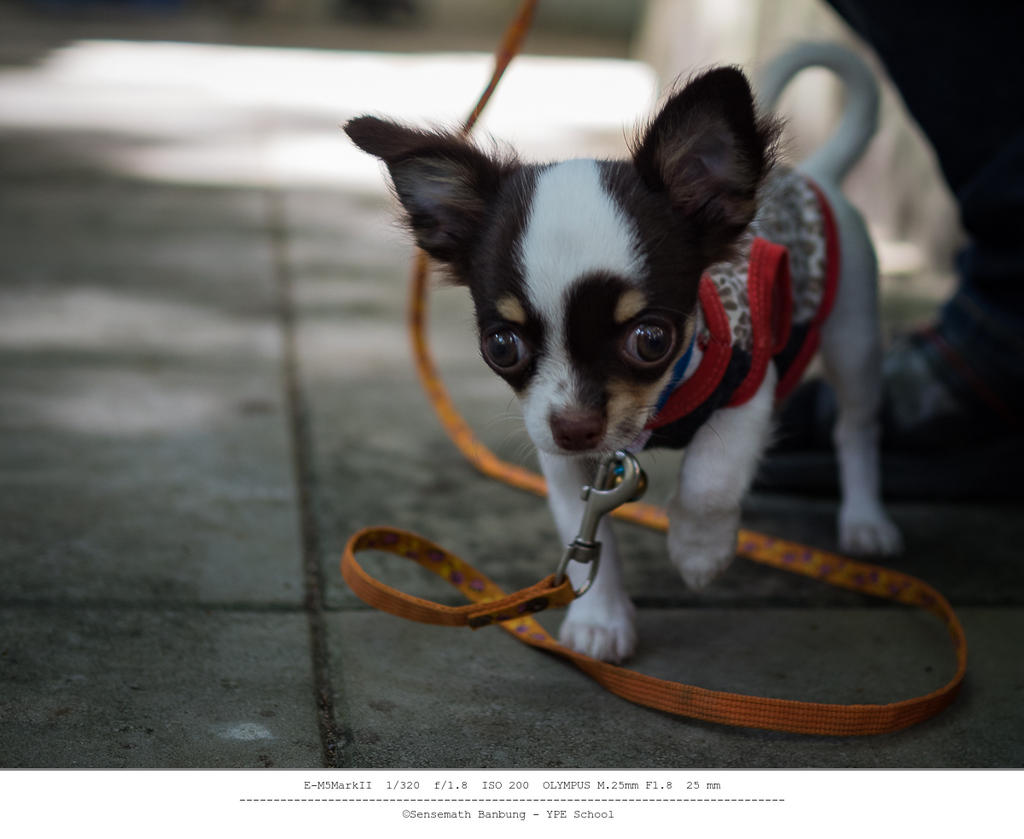 Michael's Photo Thread-doggy-two-month-2.jpg