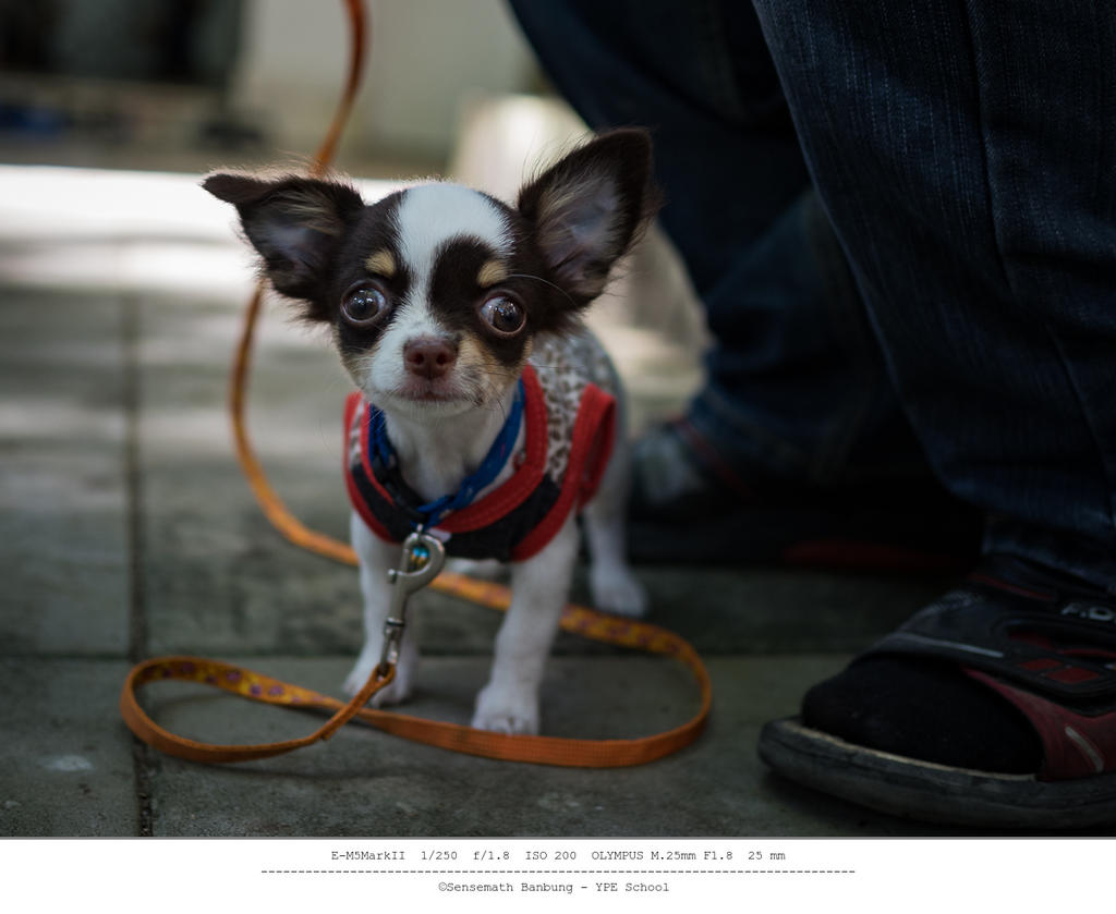 Michael's Photo Thread-doggy-two-month-3.jpg