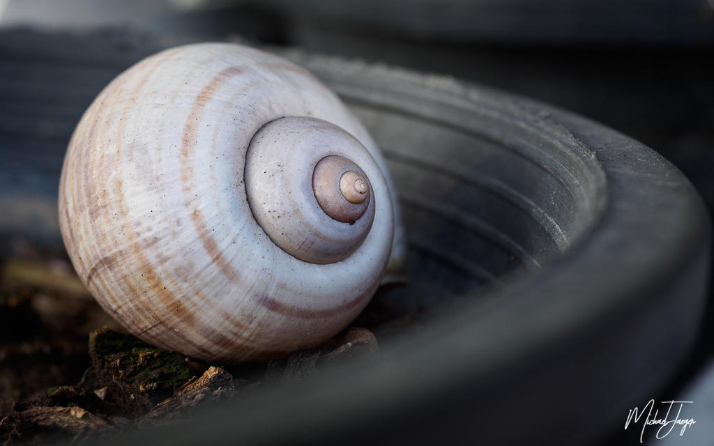 Michael's Photo Thread-shell-1.jpg