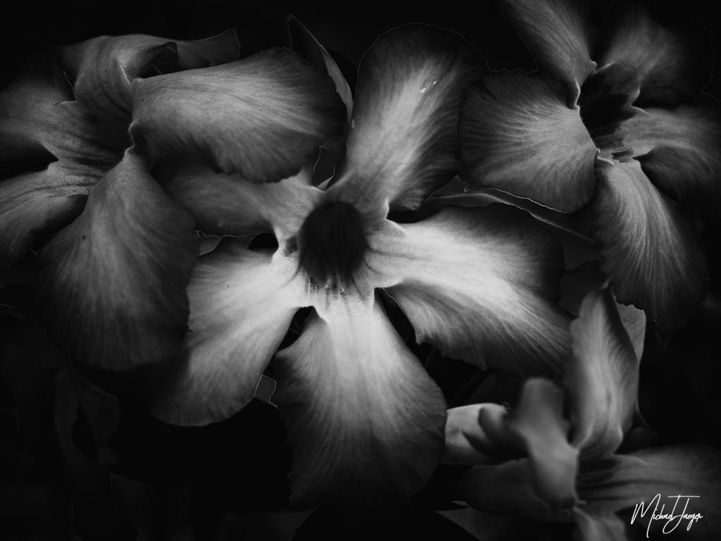 Non Nikon Black/White-flower-black-1.jpg