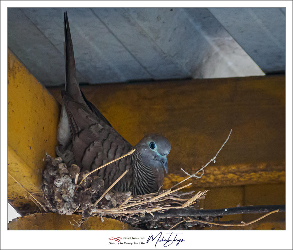 Michael's Photo Thread-vogel-bird-5.jpg