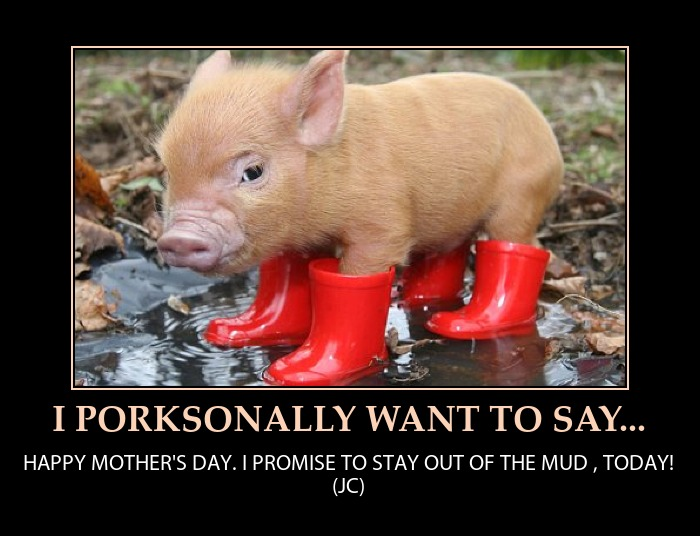 Dumb Jokes Posted Here.... if you dare.-happy-mothers-day-cute-mini-pig-humor.jpeg.jpg