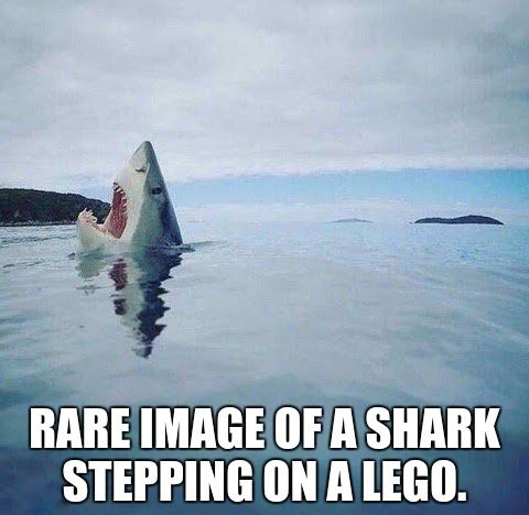 Dumb Jokes Posted Here.... if you dare.-95609ac61b9d85780ad85af54fa697bf.jpg