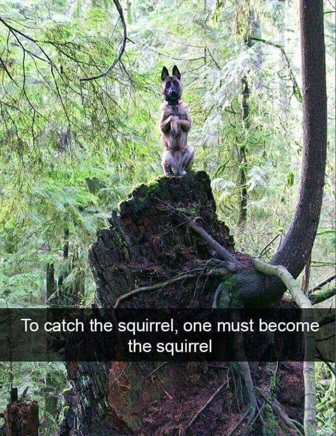 Dumb Jokes Posted Here.... if you dare.-squig.jpg