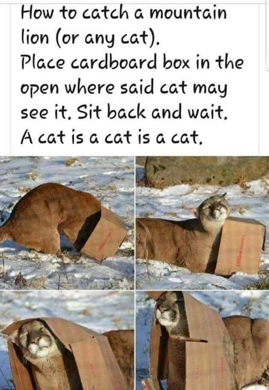 Dumb Jokes Posted Here.... if you dare.-cat2.jpg