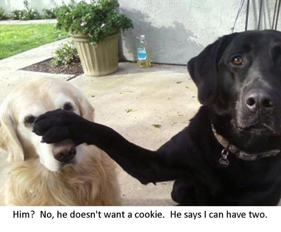 Dumb Jokes Posted Here.... if you dare.-he_doesnt_want_cookie_i_can_have_two_funny_dog_photo_with_captions_f8ec7c940acea0e11ae91653fa3...jpg