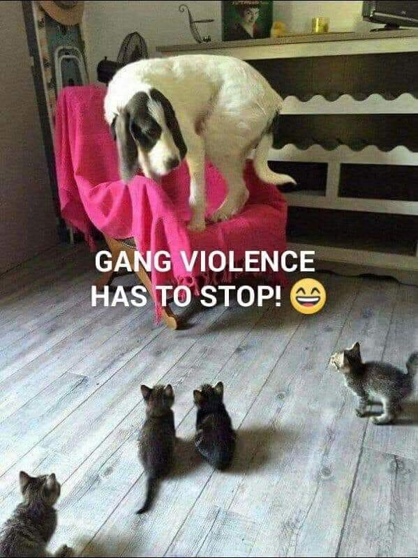 Dumb Jokes Posted Here.... if you dare.-gang.jpg