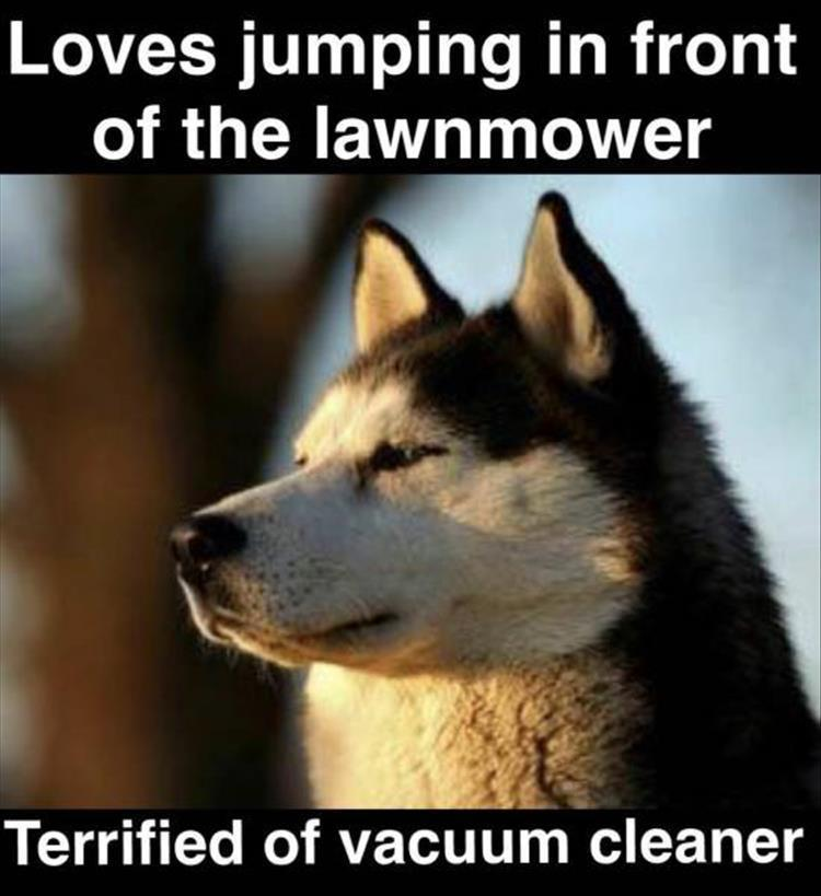 Dumb Jokes Posted Here.... if you dare.-z-funny-93-4.jpg