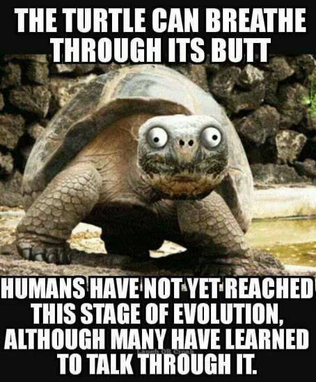Dumb Jokes Posted Here.... if you dare.-butt.jpg