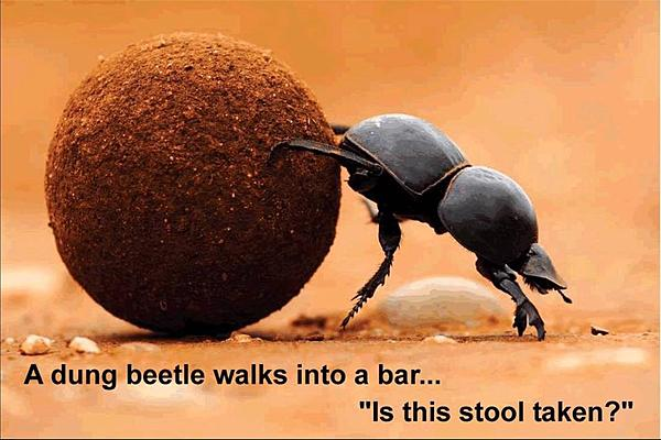 Dumb Jokes Posted Here.... if you dare.-dung-beetle.jpg