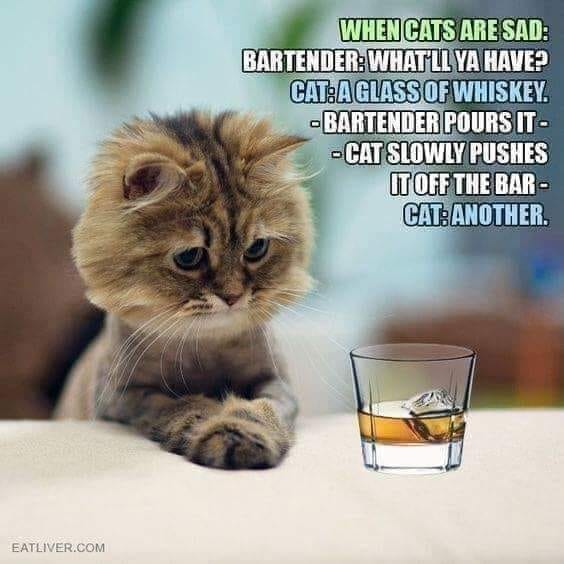 Dumb Jokes Posted Here.... if you dare.-cat.jpg