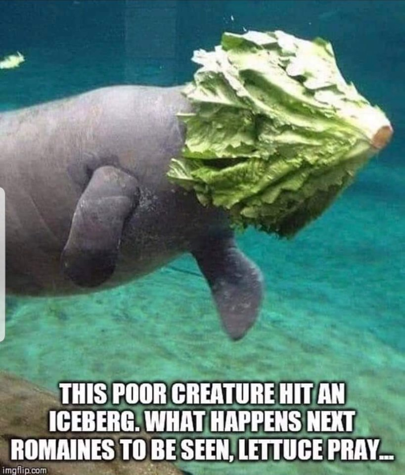 Dumb Jokes Posted Here.... if you dare.-ice.jpg