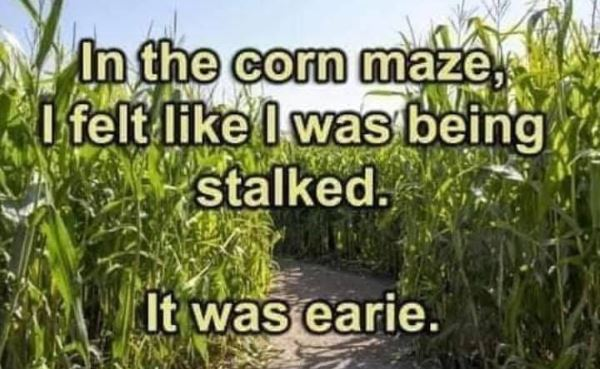 Dumb Jokes Posted Here.... if you dare.-corn.jpg