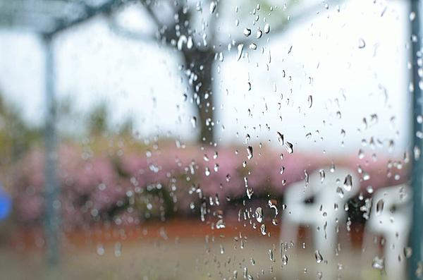 Is the shallow DOF disturbing or does it add to composition?-01raining.jpg