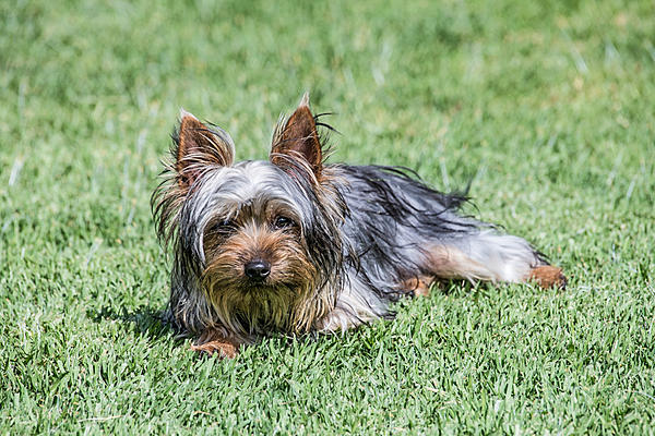 One of our dogs-dsc_0200.jpg