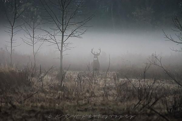 Buck in the fog-013-2-.jpg